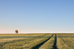 Solitaire tree on horizon and ruts in field Royalty Free Stock Photography