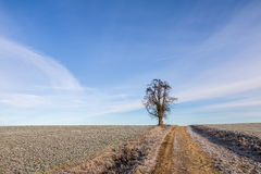 Solitaire tree on horizon under blue sky Stock Photography