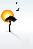 Solitaire tree, shadow, sunset, flying birds Stock Photos