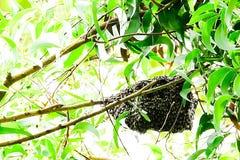 Solitamente, le api costruiscono i loro nidi su negli alberi immagini stock
