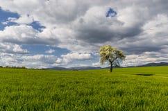 Solitario del árbol Imagenes de archivo