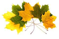 Solitario del otoño. Imagen de archivo