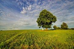 Solitario e calvario dell'albero Immagine Stock