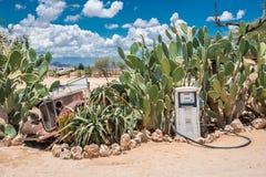 Solitario en Namibia Imagen de archivo