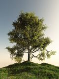 Solitary Birch Tree. Standing on a grassy hill, 3d digitally rendered illustration Stock Image