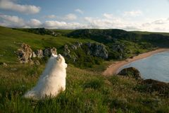 Solitary dog. Sitting on the high coast and looking to the distance Royalty Free Stock Image