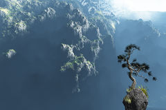 Solitary dwarfed pine Royalty Free Stock Photos