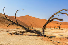 Deadvlei in Namib-Naukluft National Park Royalty Free Stock Photos