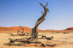 Deadvlei in Namib-Naukluft National Park Stock Photos