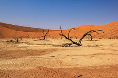 Deadvlei in Namib-Naukluft National Park Stock Image