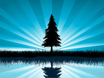 Solitary fir tree. Silhouette of a solitary fir tree reflected in water Royalty Free Stock Photos