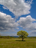 The Solitary flowering tree and cloudy sky Royalty Free Stock Images
