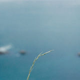 Solitary grass against the deep blue sea Stock Photo