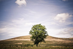 Solitary green tree in the missle of a wild field. Scenic landscape with a solitary green tree in the missle of a wild field Royalty Free Stock Photos