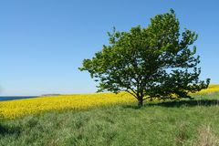 Solitary lonely tree on a hill Stock Image