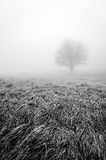Solitary and lonley tree in black and white Royalty Free Stock Photos