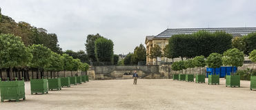 Solitary man strolls down the middle of an alley of young trees in the Tuileries Gardens in Paris Royalty Free Stock Photos