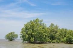 Solitary mangrove shrub in salt water Stock Photos