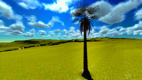 Solitary  palm tree Stock Photos