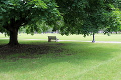 Solitary park bench under shade tree Stock Image