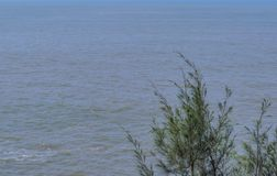 Single Tree - on a ocean background royalty free stock photography