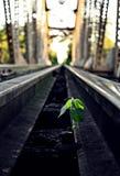 Solitary. Railway plant solitary green life Stock Photos