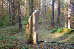 Solitary rock in the forest Stock Image