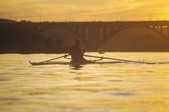 Solitary Rower at sunset on Potomac River, Washington, D.C. Royalty Free Stock Photo