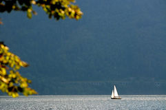 Solitary sailboat on a lake Royalty Free Stock Image
