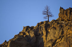 A solitary sentinel tree. Royalty Free Stock Image