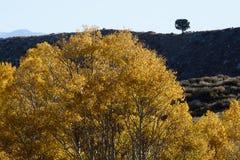 Aspens in Inyo National Forest, Sierra Nevada Range, California 2 Royalty Free Stock Photos