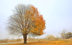Solitary Single Tree Stock Photos