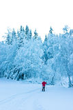 Solitary Skier. A lone skier in a snow-covered landscape, Norway Stock Image