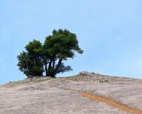 Solitary stand of trees. Rough path leading to a lonely stand of trees in a barren landscape royalty free stock image