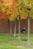 Solitary Study Session. A college student studying outdoors in autumn Stock Image