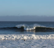 A Solitary Surfer Appraoches the Waves royalty free stock photography