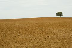 Solitary tree. In brown wasteland Royalty Free Stock Photo