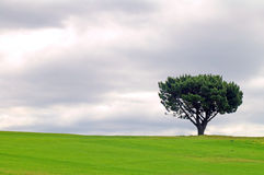 Solitary tree. Green field, grey clouds, it's going to rain Stock Images