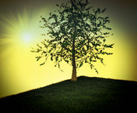 Solitary tree Royalty Free Stock Image