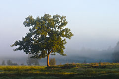 Solitary tree. In a moor in the morning Royalty Free Stock Images