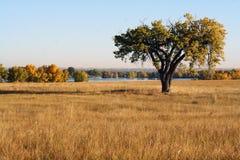 Solitary Tree Royalty Free Stock Photo