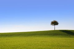 Solitary tree Royalty Free Stock Photos