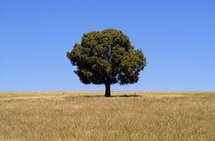 Solitary Tree. Tree in a field of brown grass royalty free stock photography