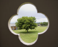 Solitary tree. View through a window in the shape of a cloverleaf - adobe RGB Royalty Free Stock Image