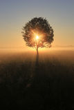 Solitary Tree At Dawn, Russia Stock Images