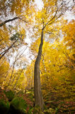 Solitary tree in autumnal forest with mossy stones Stock Photo