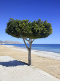 Solitary tree on the beach Stock Photography