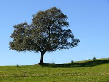 Solitary tree on blue Royalty Free Stock Photo