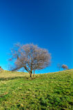 Solitary tree on blue sky Royalty Free Stock Photos