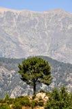 Solitary Tree Royalty Free Stock Photos